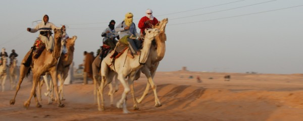 Mideast Enemies Unite to Make Camel Racing an Olympic Sport