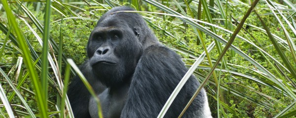 Israel to Place Gorillas Near Gaza; Hopes Int'l Community Will Care About Rocket Attacks