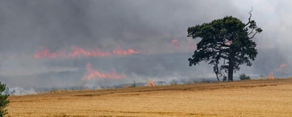UN Condemns Israeli Farmers for Damaging Gaza Fire Kites