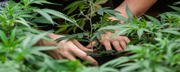 Israelis Concerned Another War with Hezbollah Will Disrupt Weed Supply
