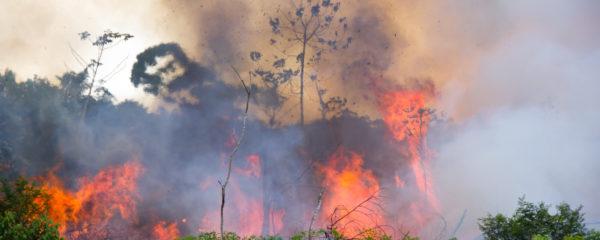 ISIS Takes Responsibility for Amazon Fires