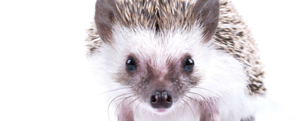 Bronx Zoo to Ban Video Games After Hedgehog Attacks Woman, Steals Rings