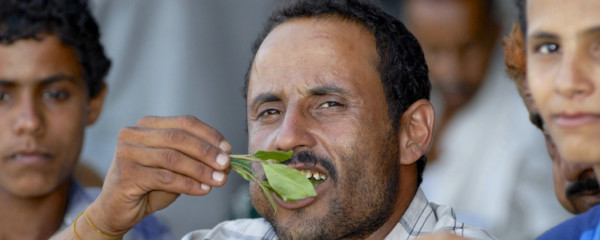 Yemen Saves the Day: There Will Be Enough Khat for Everyone