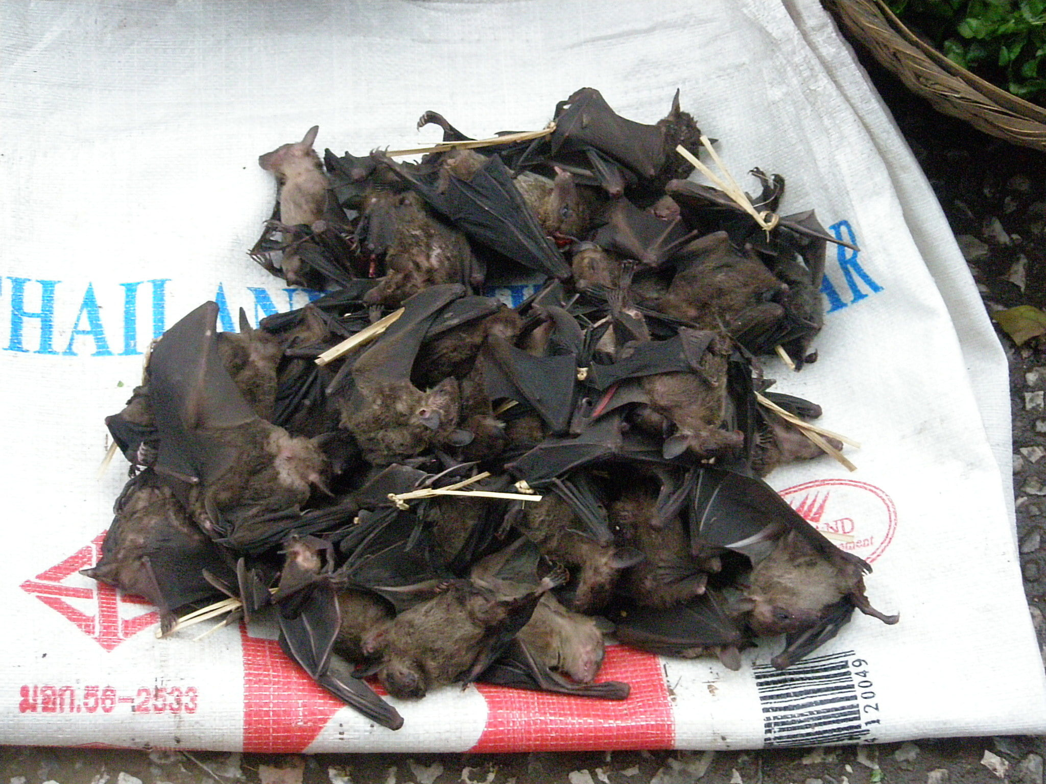 'I Was on Ambien When I Ate the Bat' Wuhan Wet Market Customer Admits